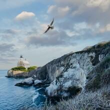 Bird Flying Over The Rocky Coast Of The Ocean.