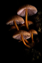 Mushroom Macro Photography