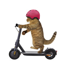 A Beige Cat In A Bicycle Helmet Is Riding A Black Electric Scooter. White Background. Isolated.