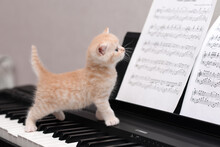 Kitten Playing Piano