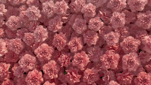 Vibrant, Elegant Wall Background With Carnations. Colorful, Floral Wallpaper With Beautiful, Red Flowers. 3D Render