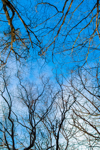 Dry bare tree branches on a background of blue sky in sunny weather