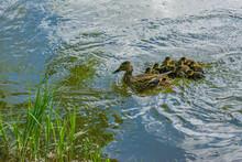 Le Cours De Natation - Swimming Lesson