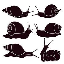 Hand Drawn Silhouette Snail