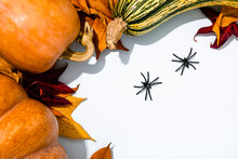 Halloween Background With Various Pumpkins, Autumn Leaves And Two Spiders