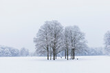 Empty snow-covered park in winter