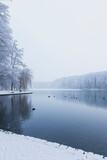 Birds swimming in Adenauer Weiher during winter
