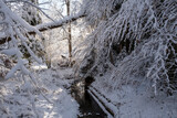 Stream amidst snow covered trees in forest
