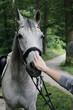 koń, portret konia, głowa konia, jazda konna