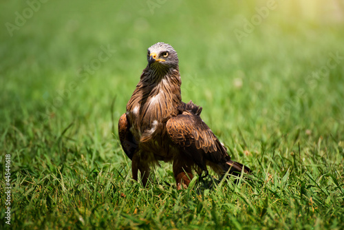 Photo Stunning bird portrait in wild nature