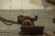 Low Angle Shot Of A Monkey In A Cage