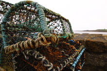 A Lobster Trap Or Lobster Pot Is A Portable Trap That Traps Lobsters Or Crayfish.In Scotland In The North,the Word Creel  Is Used To Refer To A Device Used To Catch Lobsters And Other Crustaceans.