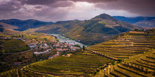 Flight Over Typical Vineyards In Douro Valley In Portugal - Videoclip