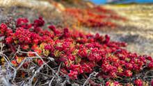 Wildflowers Along The Coast