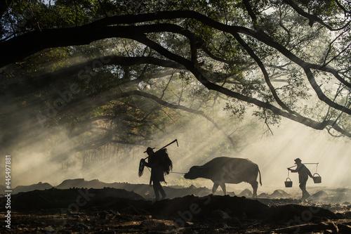 Obraz na plátně XIAPU, CHINA – DEC 07, 2019: Farmers walk a buffalo through the morning sunlight