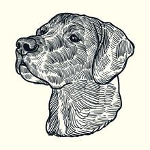 Vintage Hand Drawn Sketch Black Labrador Dog Head