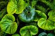 Struktur von Blätter abstrakt in Tönen von grün
