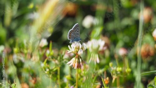 Foto diminuta  mariposa multicolor posada sobre una flor blanca, cuatro patas y dos a