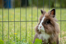 Beautiful Shot Of An Adorable Fluffy White And Brown Rabbit On The Green Grass
