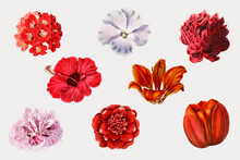 Blooming Colorful Flowers Set Vector