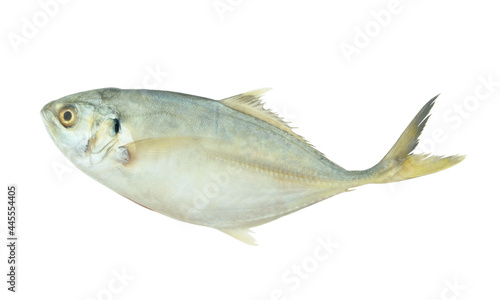 Fotografie, Obraz Yellowtail scad fish isolated on white background