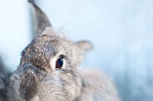 Bunny Peeking