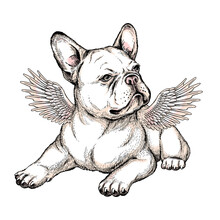 Cute French Bulldog Puppy With Angel Wings. Vector Illustration In Hand-drawn Style. Stylish Image For Printing On Any Surface
