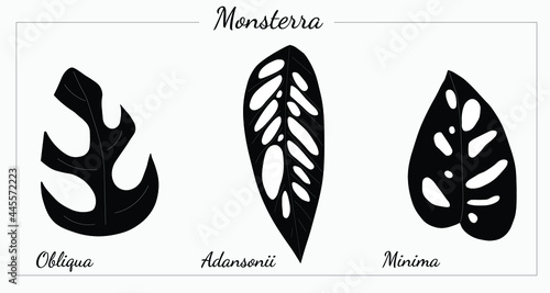Canvas Print Different types of Monstera vector silhouette