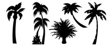 Palm Set. Exotic Trees. Palm Silhouette. Isolated On White Background. Traveal Holiday Set. Vector Illustration. Tropical Mood. Nature Collection. Black Illustration. Happy Holiday.