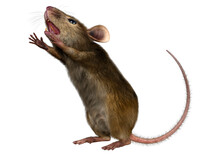 3D Rendering Little Broun Mouse On White
