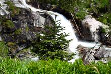 Cold Stream In The High Tatras