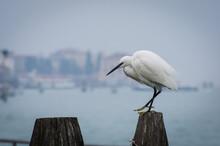 Una Garzetta Ferma Su Una Briccola Veneziana In Una Giornata Di Nebbia
