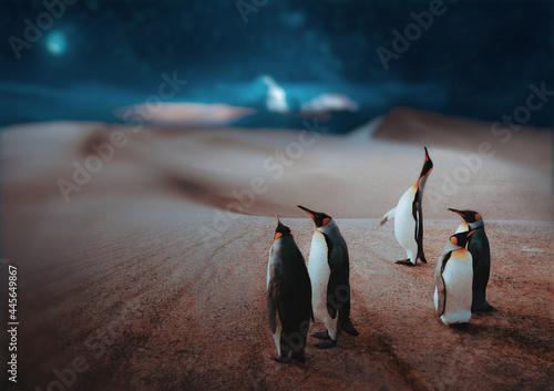Canvas Penguin