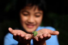 Little Asians Boy Looking At A Caterpillar Sphinx Moth Holding In Hand Background Green Color. Selective Focus Foreground