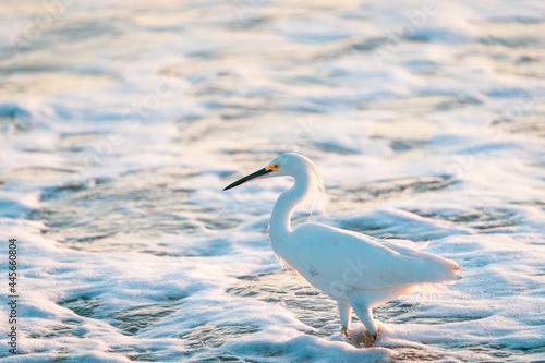Fototapeta premium heron on the beach
