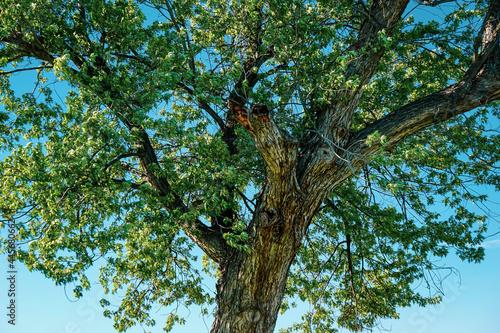 Beautiful tree and blue sky in Washington State #445680662