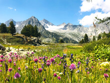 Motley Herb Meadow With Flowers In The Snowy Mountains. Breathtaking Scenic Landscape