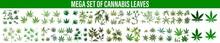 Cannabis Marijuana Leaf On White Background Vector Illustration, Green Cannabis Leaves Isolated On White Background. Growing Medical Marijuana.