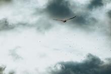 Sea Bird Flying In The Sky