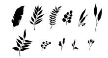 Leaves Of Tropical Plants. Black Silhouette. Vector Illustration.