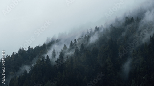 Obraz na płótnie Beautiful view of trees on a mountainside covered with fog