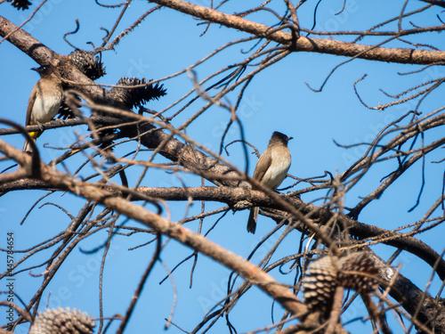 Fototapeta premium bird on a branch