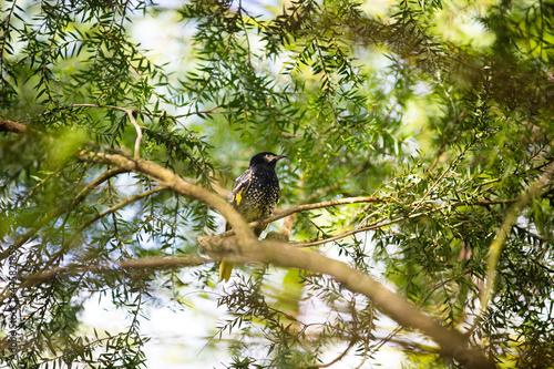Fototapeta premium bird on a tree