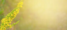 Closeup Of Yellow Flower On Blurred Green Background With Copy Space. Ecology Cover Page Concept.