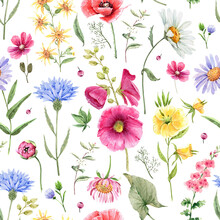 Pattern With Meadow And Garden Watercolor Colorful Flowers, Hand Painted On White Background