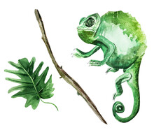 Chameleon, Branch, Tropical Leaf Watercolor Illustration. Template For Decorating Designs And Illustrations.