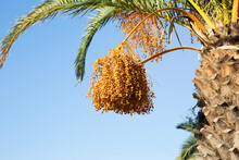 Dates Palm Tree Against Sky