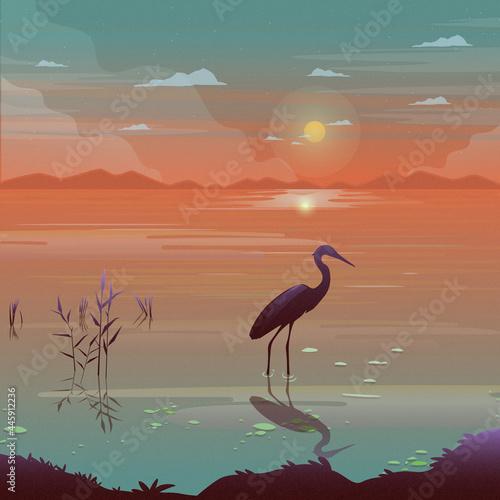 Fototapeta premium Crane Bird
