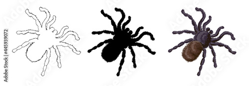 A set of three shaggy spiders - a spider in a cartoon style, an outline style and its black silhouette Fototapet