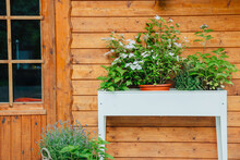 Raised Bed With Plants And Flowers Next To A Wooden House In The Garden. Hydrangea And Lavender In A Raised Bed In Summer. Beautiful Plants In Front Of A Wooden Hut